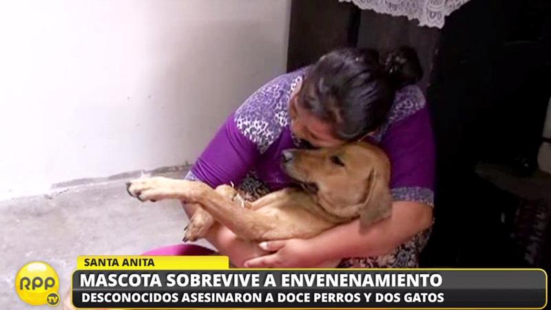 La perra Mica también fue envenenada pero fue llevada al veterinario a tiempo y sobrevive.