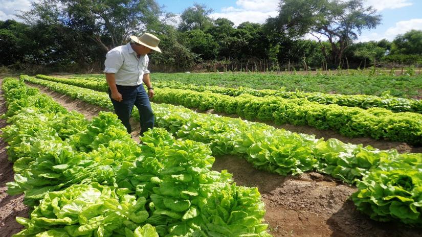 Lambayeque: Callanca principal productor de hortalizas en el norte - RPP Noticias