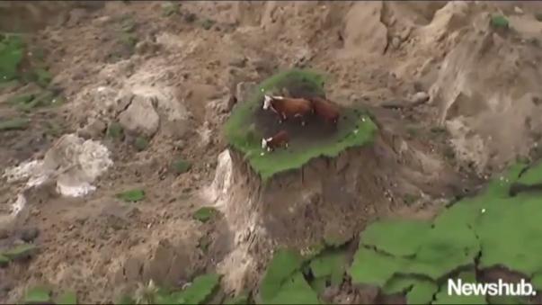 El video de las tres vacas desconcertadas sobre el pequeño islote se ha hecho rápidamente viral en YouTube.