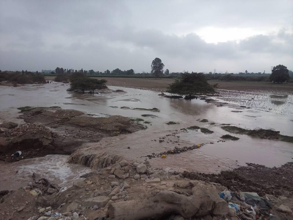 En Chincha, el río Matagente arrasó con cultivos.