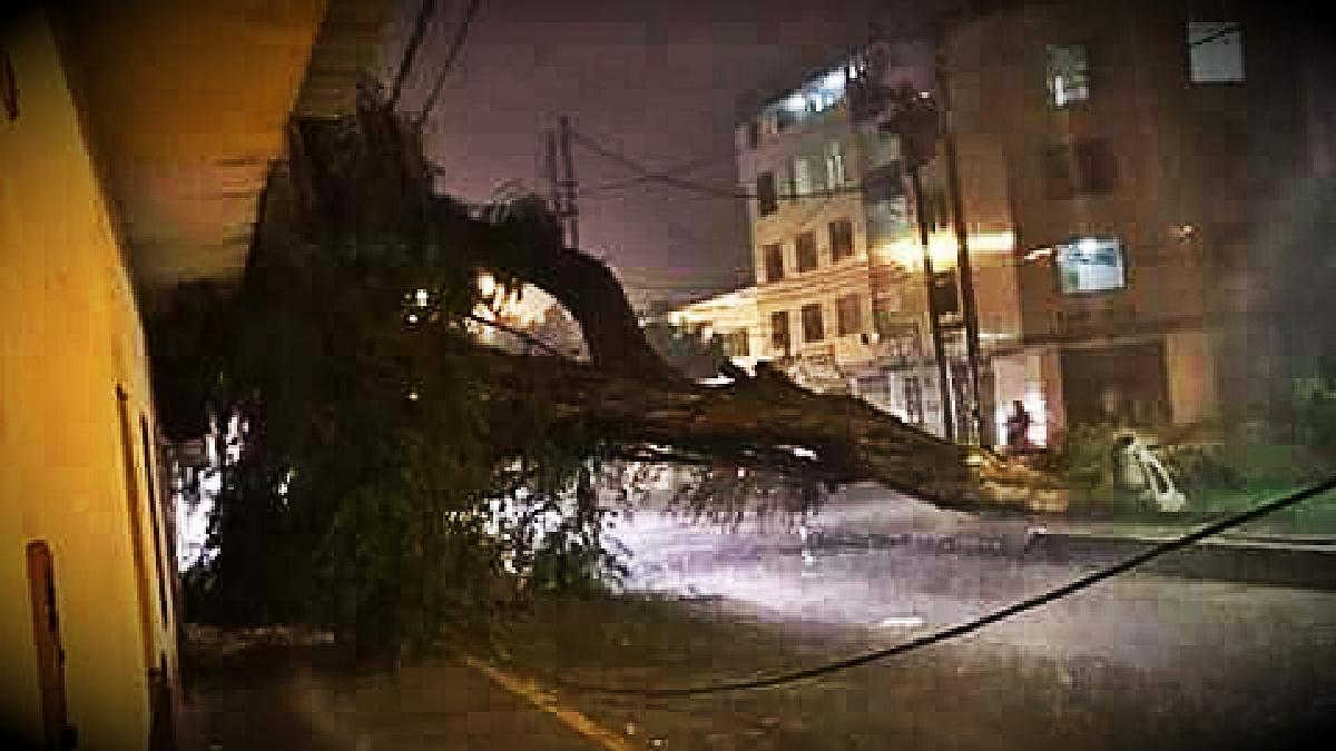 Han caído 13 árboles en toda la ciudad a causa de las lluvias.