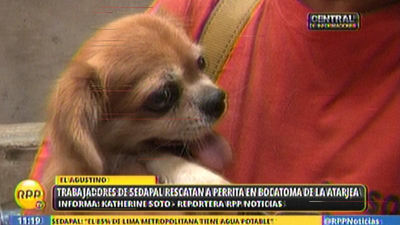 Panchita se ha convertida en la mascota de los trabajadores de la Bocatoma de La Atarjea.