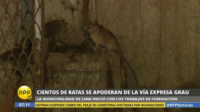 La Municipalidad de Lima comenzó los trabajos de 'desratización'