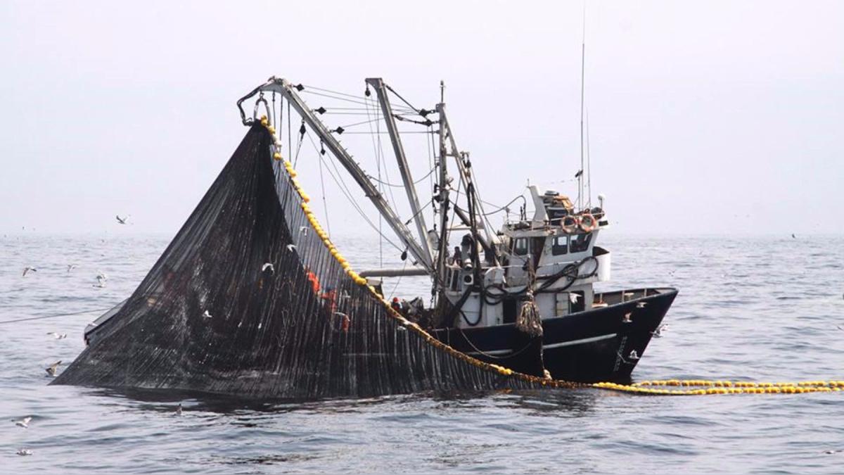 Giuffra proyectó que la próxima temporada de pesca tendrá un inicio bajo condiciones normales.