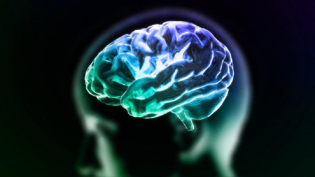 El ensayo consideró la resonancia magnética nuclear funcional del cerebro.