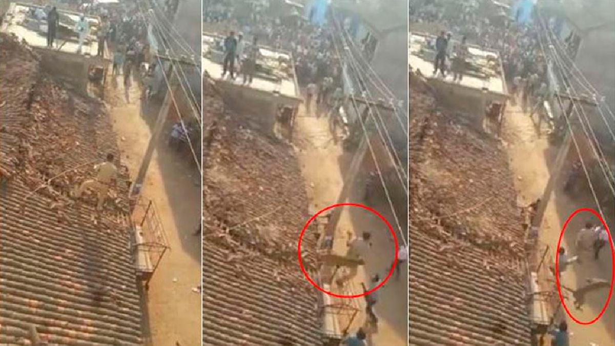 Un guardabosque fue tras él subiéndose al techo de una casa, cuando ocurrió el incidente.