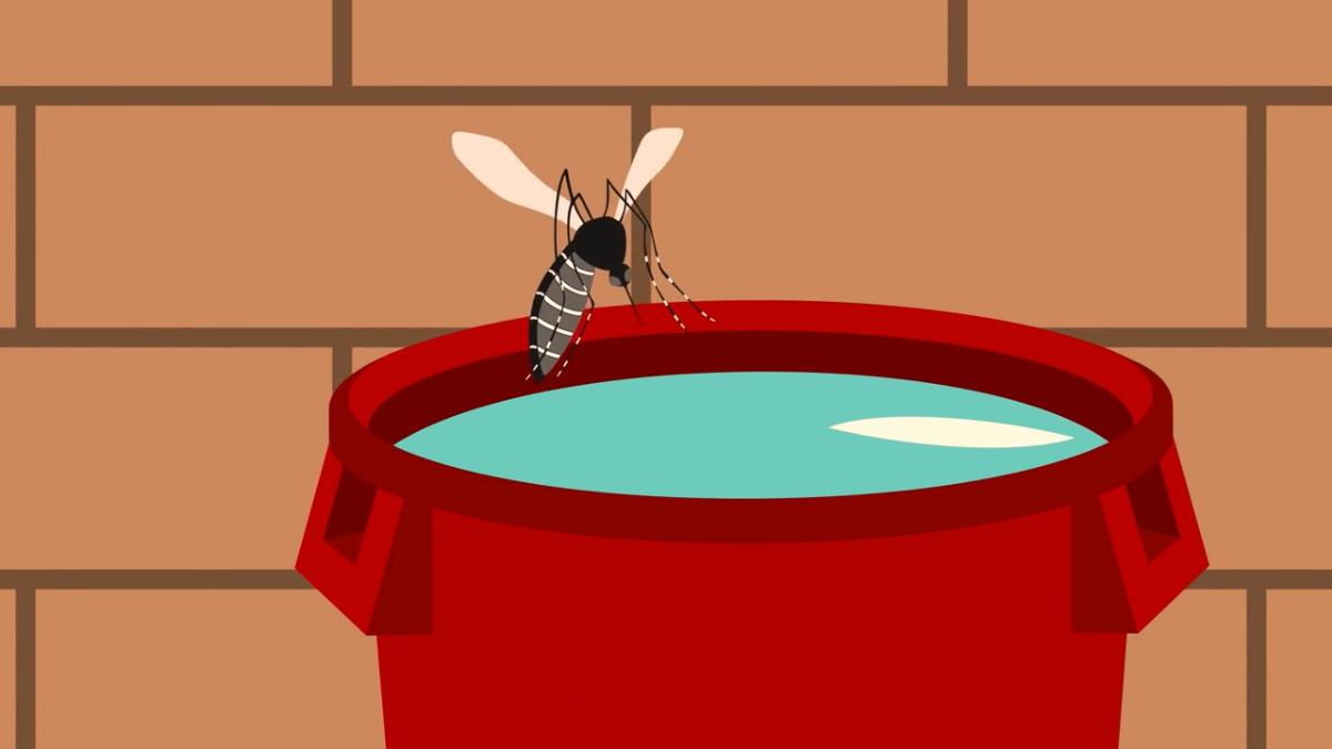Debemos exterminar al Aedes aegypti, mosquito transmisor del dengue, zika y chikungunya.
