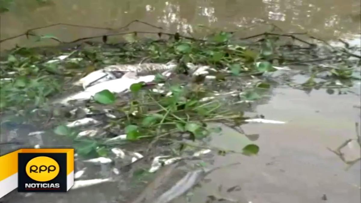 Vecinos denunciaron a presuntos pescadores mientras que autoridad indicó que los responsables no son de la zona.