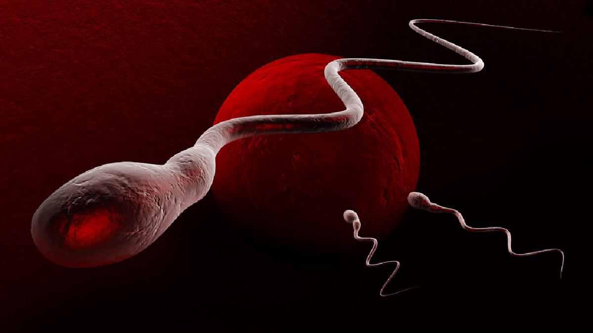 Estudio hecho en hombres occidentales alerta que el conteo de espermatozoides se ha reducido a más de la mitad (52,4 %) en los últimos 40 años.