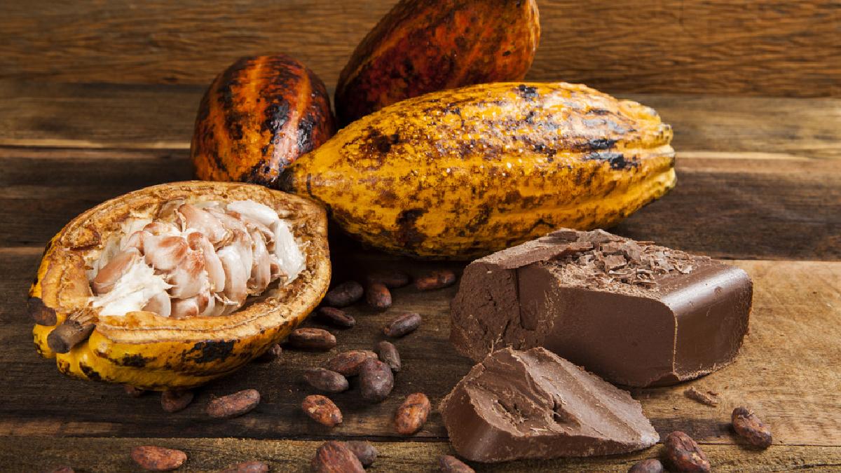 El cacao debe ser la materia prima de un verdadero chocolate.