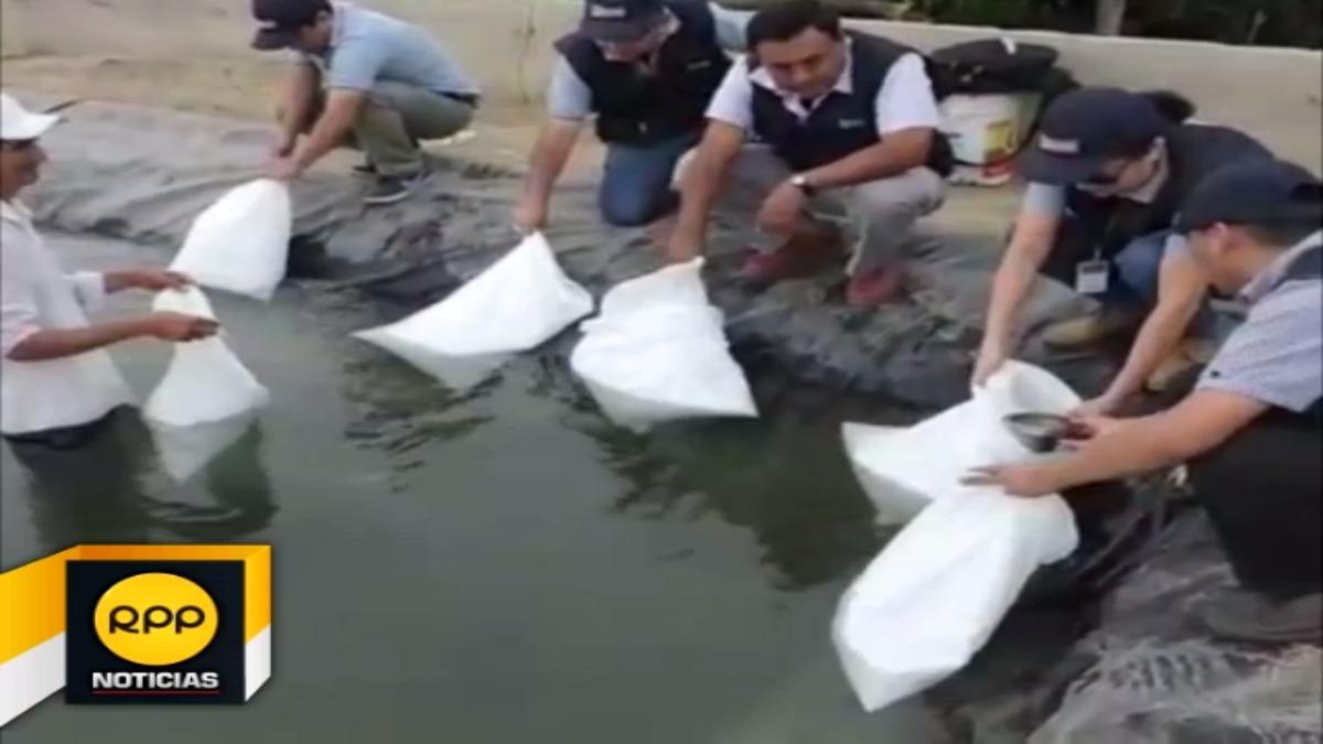 Impulsan siembra de tilapia en zonas afectadas por Niño costero