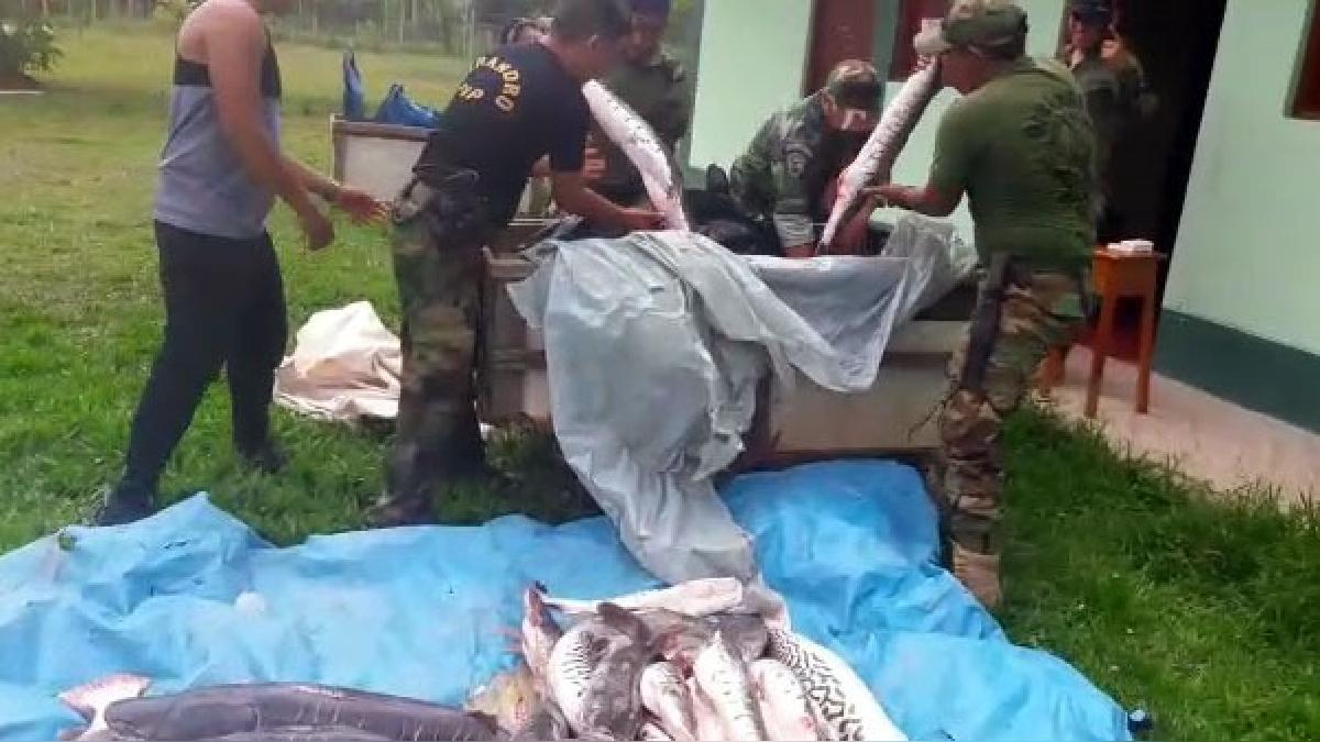 La droga fue hallada dentro del congelador de pescado.
