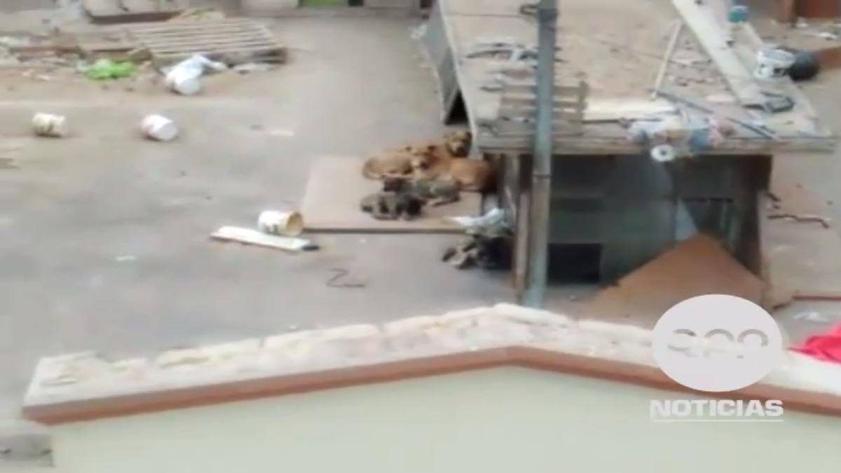 Mantener a una mascota en el tejado es considerado como maltrato indirecto.