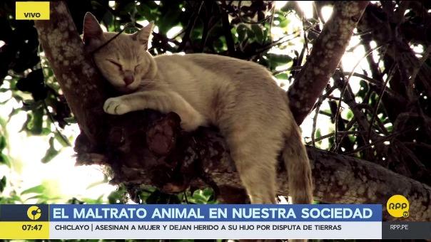 Reportaje | El maltrato animal en nuestra sociedad.