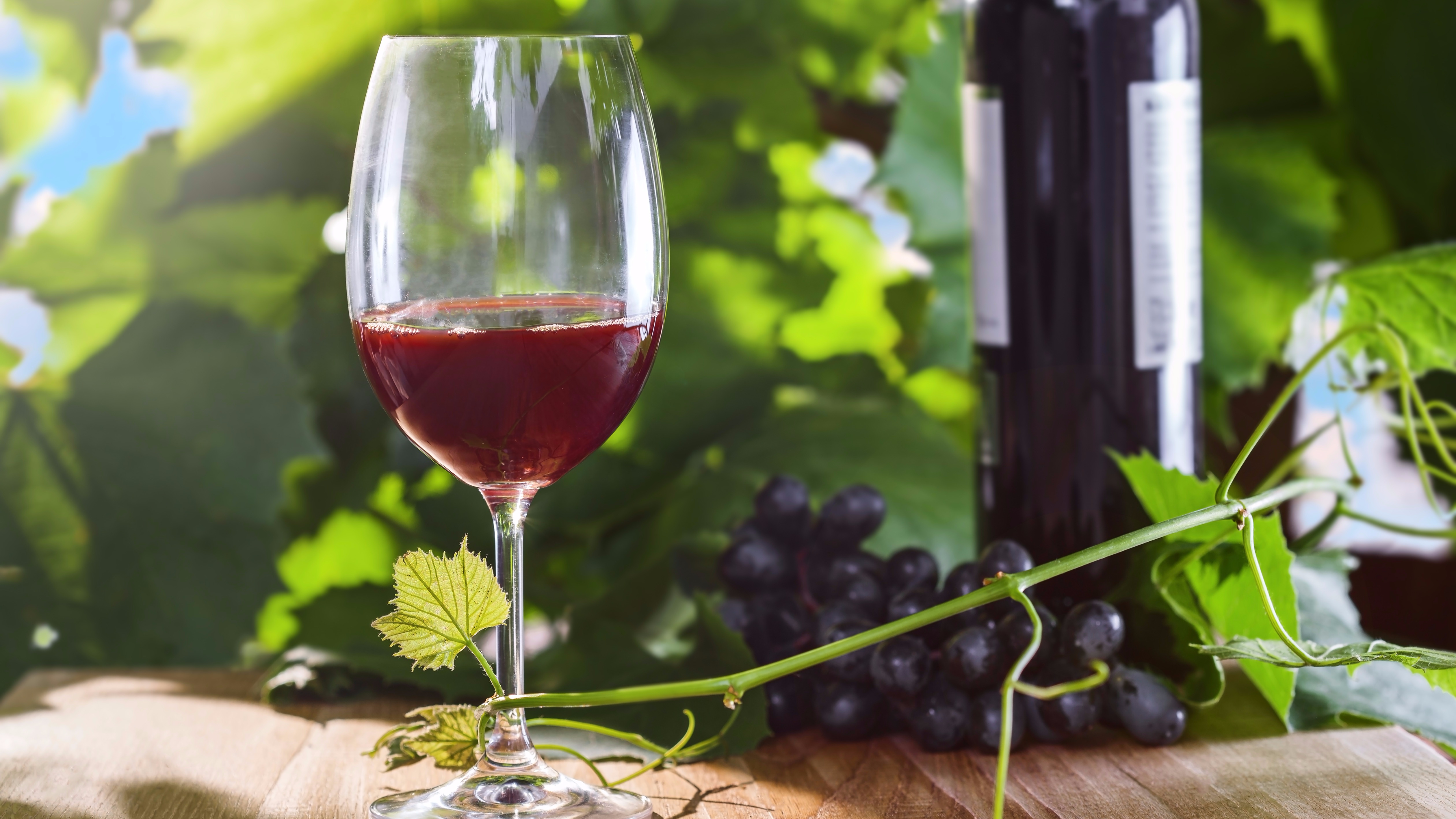 Los componentes químicos del vino favorecen al número de antioxidantes presentes en nuestro cuerpo, permitiendo también el mantenimiento de las células neuronales.