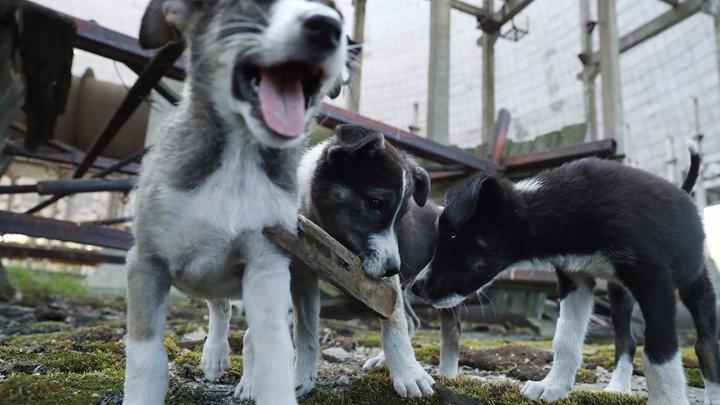 Causan ternura, pero nadie los puede tocar. Organizaciones que se enfocan en el cuidado de animales ya se está encargando en ello.