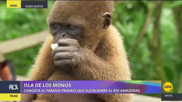 Conoce a los Peruanos Camiseta que te recibirán en la Isla de los Monos, lugar en donde protegen a estos primates.