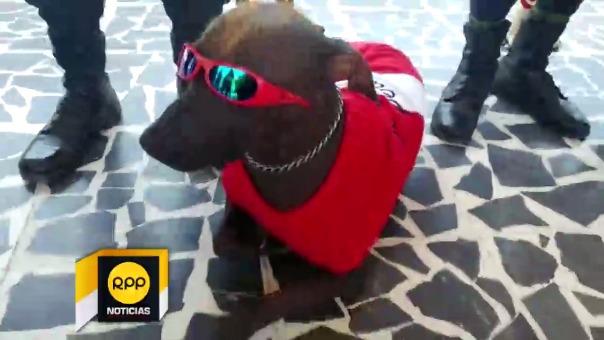 Perros de la Policía con camiseta de Perú.