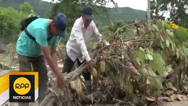 Similar situación de daños se observa en los valles de Mishquiyacu y Ponaza.
