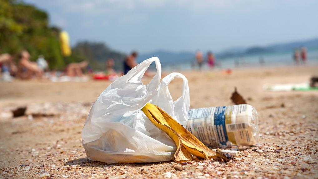 la arena expuesta a desechos o materia orgánica en descomposición, desencadena dermatitis, picazón, enrojecimiento y sobreinfección en la piel si se rasca indiscriminadamente.