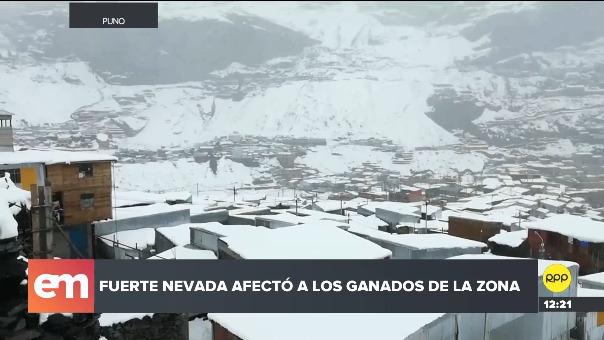 Fuertes nevadas en San Antonio de Putina.