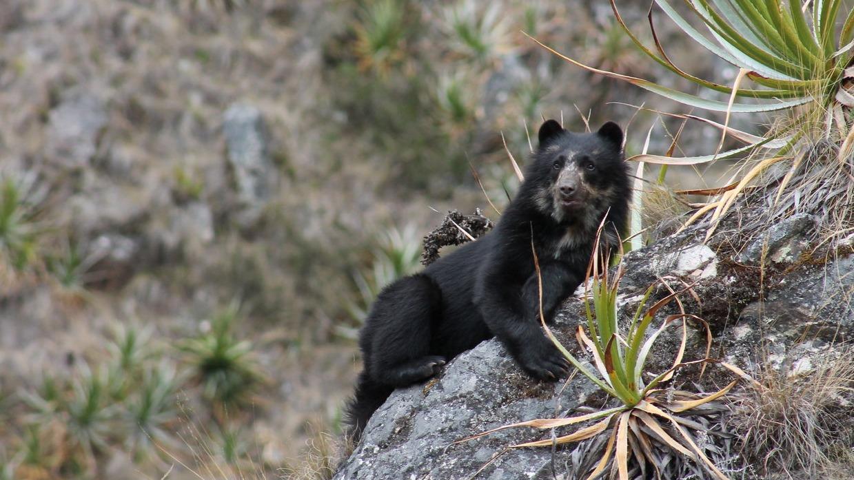 El equipo del Santuario desarrolla monitoreos de fauna silvestre con el objetivo principal de conservar los recursos naturales.