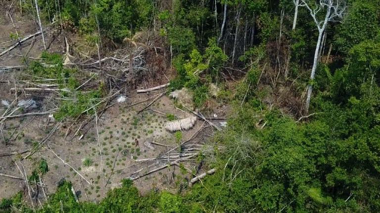 Imágenes captadas por drones revelan presencia de indígenas aislados en la Amazonía.