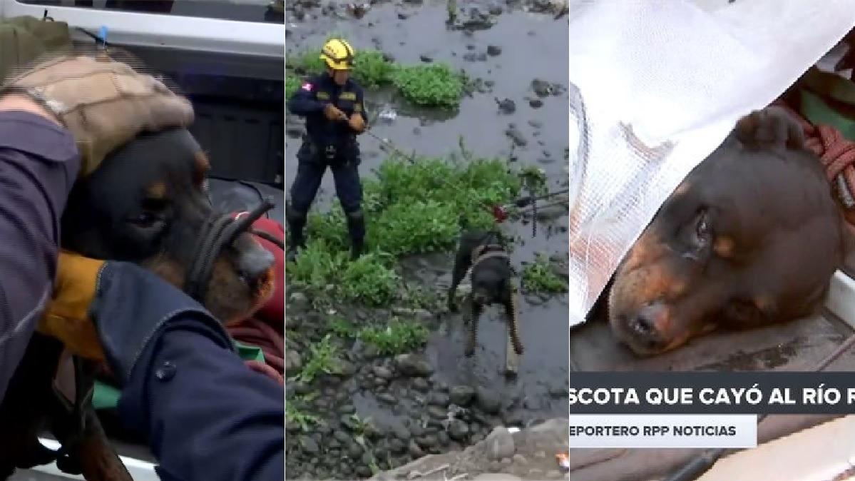 Las autoridades investigarán si el animal tiene dueño y en qué circunstancias cayó al río.