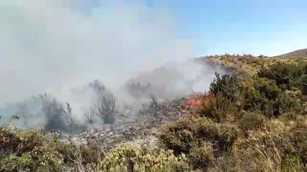 Fuego amenaza flora y fauna silvestre en límite entre Arequipa y Moquegua.