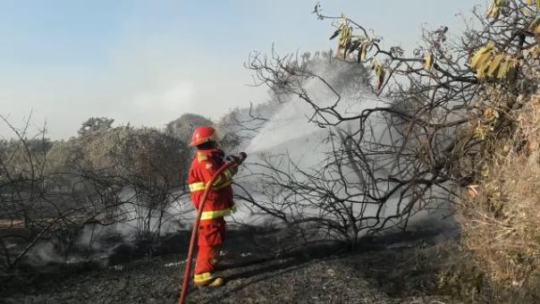 Incansable trabajo que realizan los bomberos para controlar el incendio forestal.