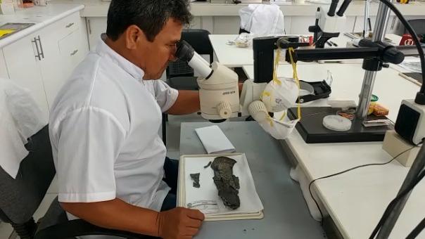 Expertos trabajan para devolver majestuosidad a pectorales de conchas spondylus.