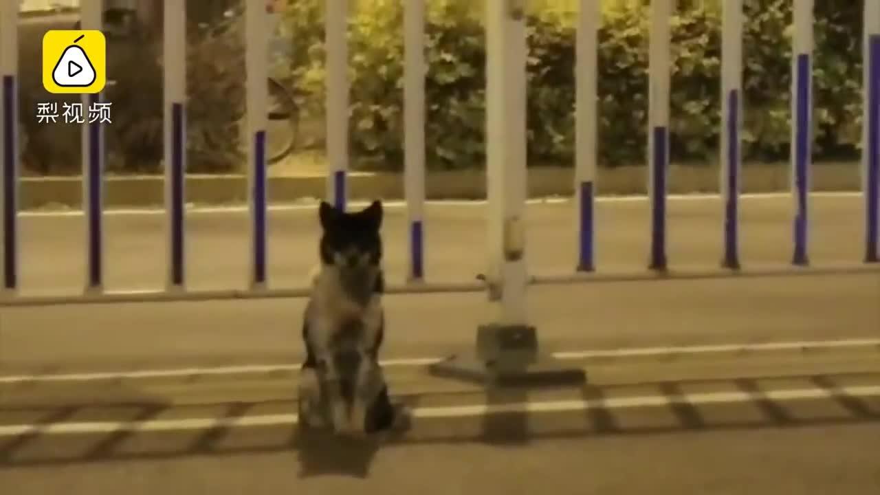 El perro se mantiene en el lugar donde murió su dueña.