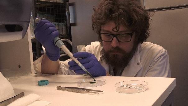 La investigación es conocia como el 'proyecto hulk'.