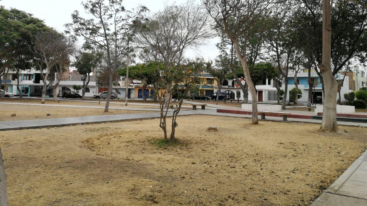 Vecinos piden la intervención de las autoridades y el resembrado de las áreas verdes.