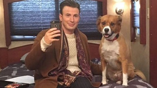 Chris Evans compartió este video de su perro Dodger con su regalo por navidad.