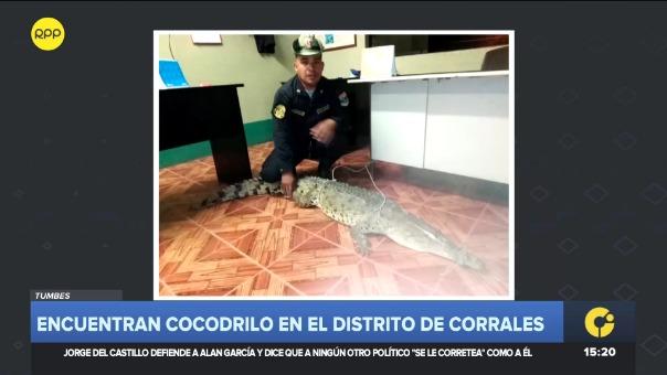 Debido a las fuertes lluvias, el reptil salió de su hábitat y fue visto en plena calle. Su paradero es desconocido.