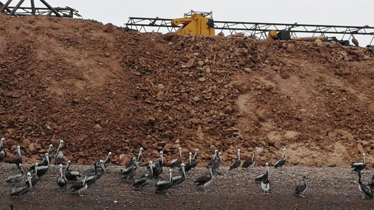 La península de Punta Pejerrey es donde se realiza la construcción del puerto. El desmonte de tierra sacado del dragado que se está haciendo en esta península le ha quitado espacio a las aves.