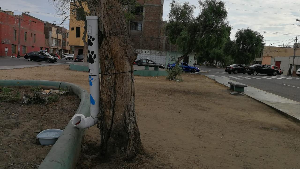 El parque luce abandonado y alberga a una treintena de gatos.