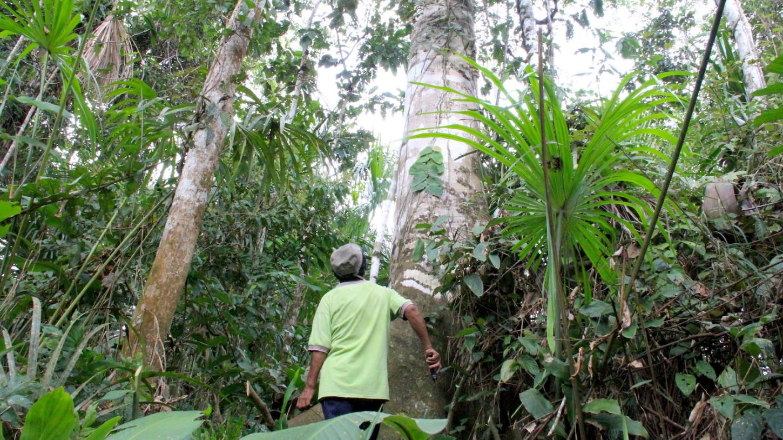 """""""En dos días vas a desaparecer"""": la historia oculta de los defensores ambientales en la selva de Perú"""