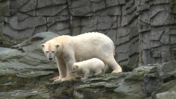 El cuidador espera que el cachorro de oso polar sea el embajador del espacio natural del Ártico.