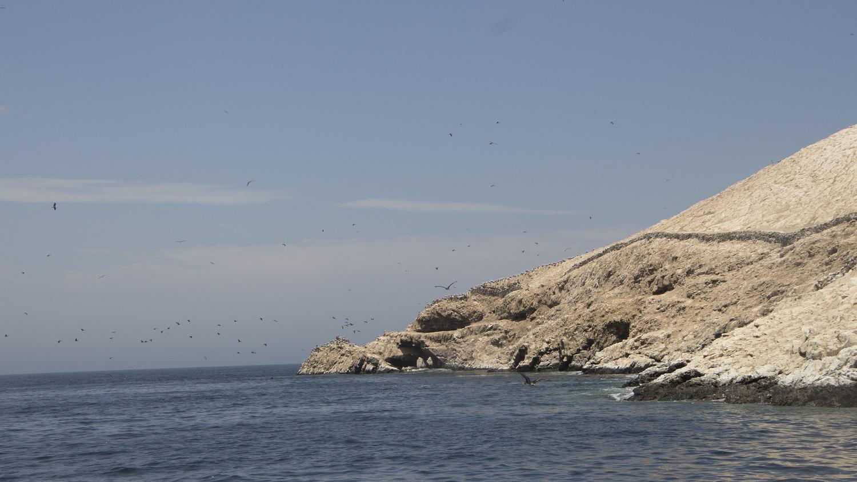 Estas islas son calificadas por los especialistas como poseedoras de un impresionante y variado ecosistema.