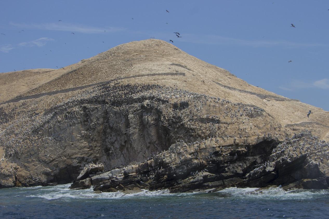 Las islas se dividen en dos Guañape Norte y Guañape Sur.