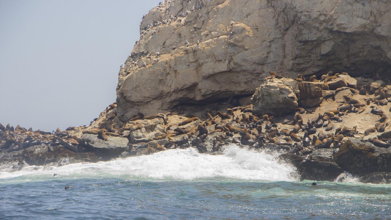Lobos marinos y aves se concentran en estas tierras.