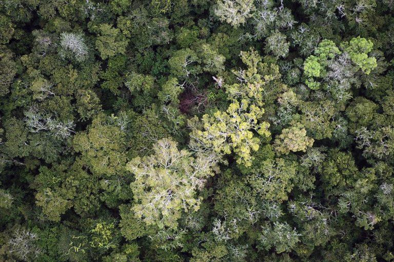 Amazonía de Bolivia