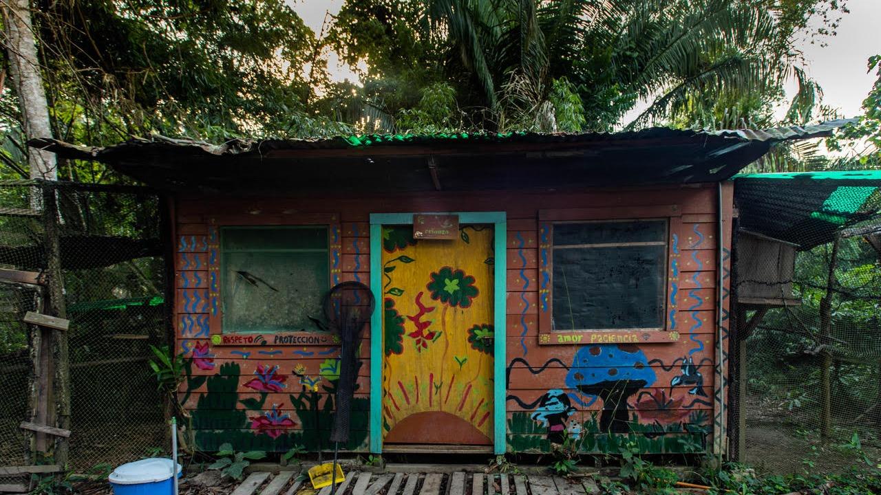 El refugio está ubicado a orillas del río Tambopata y a media hora en auto desde Puerto Maldonado.