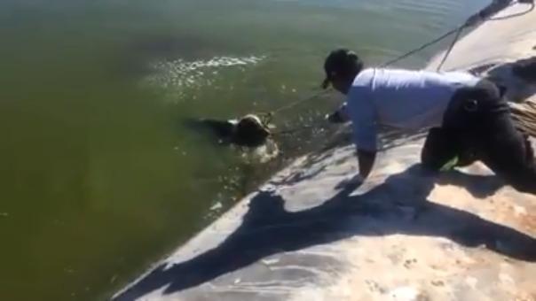 Efectivos del serenazgo rescataron a un can en el distrito de La Joya.