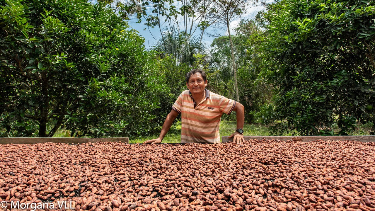 El cultivo de cacao, una alternativa a la minería ilegal.