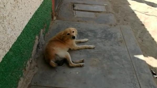 Perrito recuperado