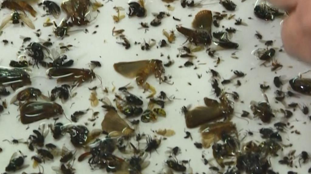 La colección, de entre 40 y 80 millones de insectos, flota en botellas de etanol guardadas en cartones.