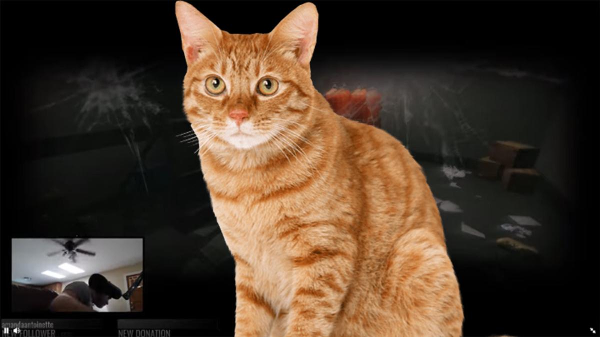El felino vomitó tanto que arruinó por completo la PC de su dueño.